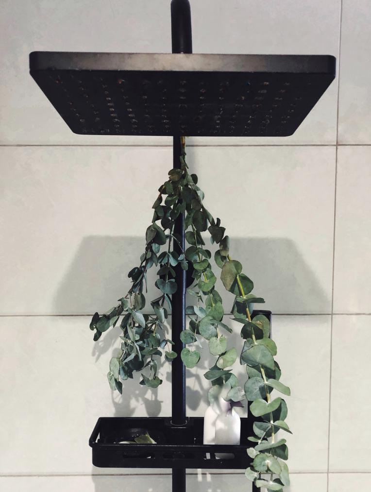 Shower head with eucalyptus